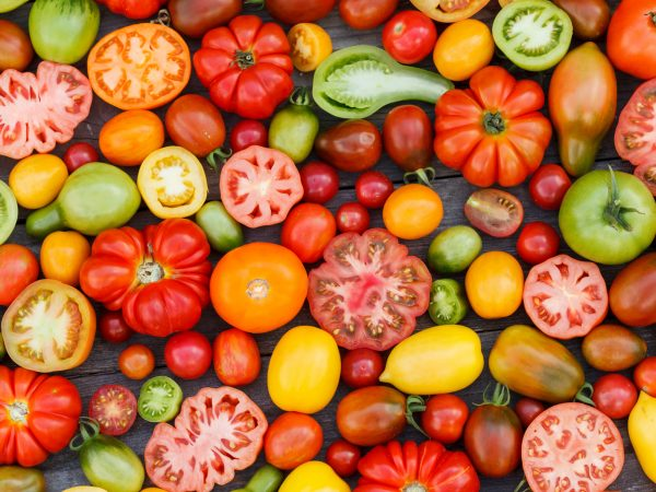 22366268 – colorful tomatoes
